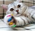 Груминг. Стрижка кошек и собак в салоне и на дому в Симферополе - Груминг-стрижки в Симферополе