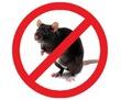 Истребление крыс и мышей! Полной уничтожение с первой обработки. Эффект мумифицирования. Гарантия., фото — «Реклама Севастополя»
