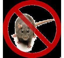 Крысы или мыши мешают спокойно жить? Обращайтесь к нам, и Вы забудете об этой проблеме. - Клининговые услуги в Ялте
