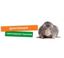 Крысы или мыши мешают спокойно жить? Обращайтесь к нам, и Вы забудете об этой проблеме. Гарантия. - Клининговые услуги в Севастополе