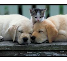 Профессиональная стрижка для кошек и собак - Груминг-стрижки в Севастополе