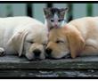Профессиональная стрижка для кошек и собак, фото — «Реклама Севастополя»