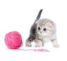 Профессиональный груминг, повседневные и модельные стрижки для собак и кошек - Груминг-стрижки в Севастополе