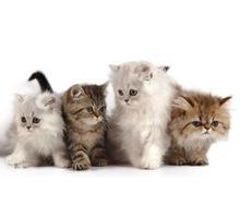 Услуги грумера. Салон красоты для кошек и собак - Груминг-стрижки в Крыму