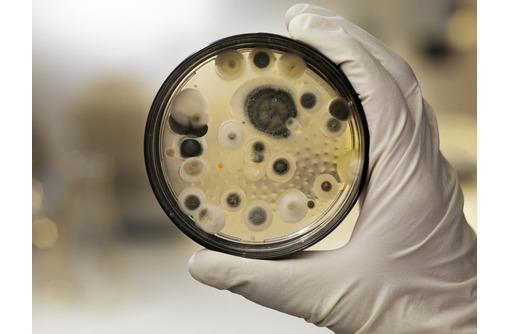 СанПомощь!  Борьба с грызунами , насекомыми , микроорганизмами. - Клининговые услуги в Севастополе