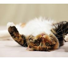 Услуги грумера. Салон красоты для кошек и собак - Груминг-стрижки в Севастополе