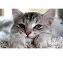 Профессиональный груминг. Стрижка кошек и собак - Груминг-стрижки в Севастополе