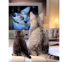 Установка, настройка спутникового телевидения - Спутниковое телевидение в Феодосии