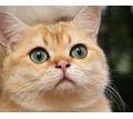 Груминг, профессиональная стрижка собак и кошек - Груминг-стрижки в Севастополе