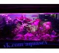 Изготовление,установка, обслуживание (чистка) аквариумов Севастополь - Аквариумные рыбки в Севастополе