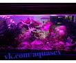 Изготовление,установка, обслуживание (чистка) аквариумов Севастополь, фото — «Реклама Севастополя»