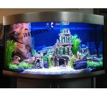 Изготовление,обслуживание (чистка) аквариумов в Крыму и Севастополе - Аквариумные рыбки в Севастополе