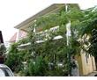Продается дом на берегу моря Форос ИЖС, фото — «Реклама Фороса»