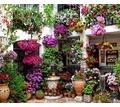 Курсы Флорист-дизайнер (56 ак.ч.) идет набор в  группу - Курсы учебные в Севастополе