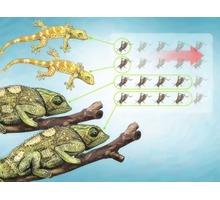 Сверчки живые для рептилий - Рептилии в Крыму