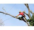 Спил деревьев,вывоз,земляные работы,уборка участка - Сельхоз услуги в Севастополе