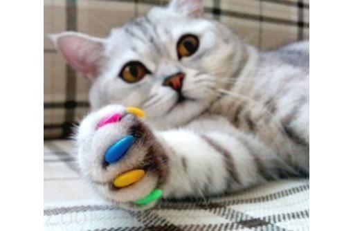 Профессиональный груминг. Стрижка кошек и собак, фото — «Реклама Керчи»