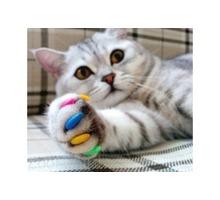 Профессиональный груминг. Стрижка кошек и собак - Груминг-стрижки в Крыму