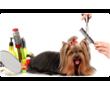 Стрижка кошек и собак, услуги грумера., фото — «Реклама Керчи»