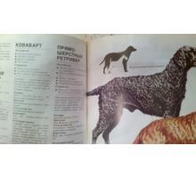Продам в Севастополе справочную книгу: Ваша собака. Автор Джоан Палмер (Великобритания) - Книги в Севастополе