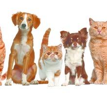 Груминг. Комплексный уход за кожей и шерстью собак и кошек. - Груминг-стрижки в Крыму