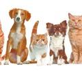 Груминг. Комплексный уход за кожей и шерстью собак и кошек. - Груминг-стрижки в Керчи