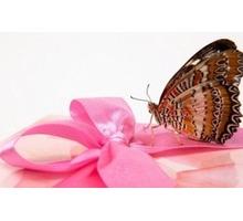 Продажа живых тропических бабочек #Салют из #бабочек - Свадьбы, торжества в Бахчисарае