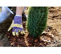 Озеленение, высадка и обрезка деревьев, газоны, ландшафты, системы полива. - Ландшафтный дизайн в Севастополе