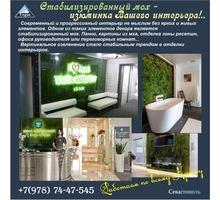 Стабилизированный мох в интерьере - Дизайн интерьеров в Севастополе