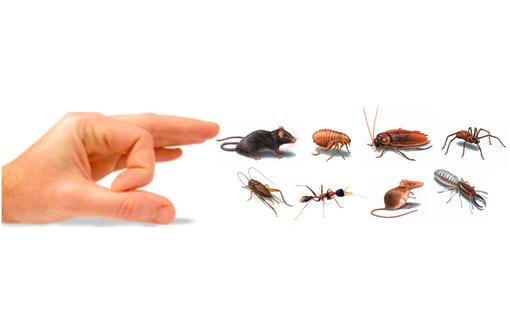 Профессионально! Эффективно! Борьба с насекомыми и грызунами! Дезсредства! Официально! ГАРАНТИЯ! - Клининговые услуги в Феодосии