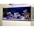 Морской аквариум на заказ Севастополь - Аквариумные рыбки в Севастополе