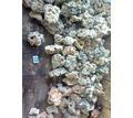 продается аквариумный грунт кварц серого цвета 2-6 мм - Аквариумные рыбки в Симферополе