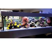 Изготовление морского аквариума на заказ в Ялте - Аквариумные рыбки в Крыму