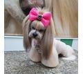 Профессиональная стрижка мелких, средних, крупных пород собак, а также кошек и др - Груминг-стрижки в Симферополе