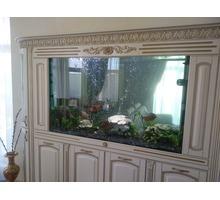 Аквариумы морские и пресноводные под заказ - Аквариумные рыбки в Севастополе