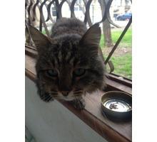 Пропал кот на Северной стороне (Севастополь)! - Бюро находок в Севастополе