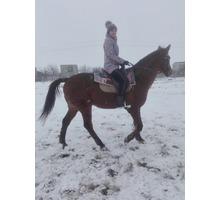 Конные прогулки, обучение верховой езде, фотосессии с лошадьми в Евпатории - Свадьбы, торжества в Евпатории