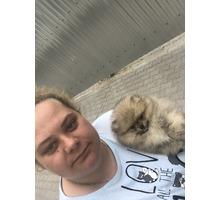 Передержка собак до 6 кг - Дрессировка, передержка в Севастополе