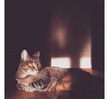 Пропал кот, район 5го километра - Бюро находок в Севастополе