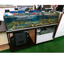 Витрина аквариум для устриц, крабов, омаров, гребешков, морепродуктов. Продажа и изготовление в Ялте - Продажа в Крыму