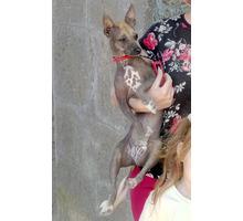 Пропала собака в посёлке Береговое - Собаки в Феодосии