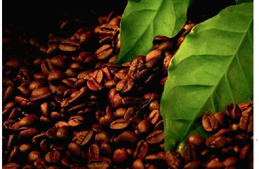 Купить Экстракт черного кофе, фото — «Реклама Джанкоя»