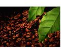 Купить Экстракт черного кофе - Косметика, парфюмерия в Джанкое