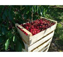 Ящики деревянные шпоновые - Сельхоз услуги в Крыму
