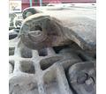 Звено гусеницы крана гусеничного КС-8165 - Продажа в Керчи