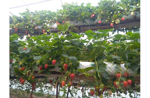 Сборщик ягод/Плодоовощевод - Сельское хозяйство, агробизнес в Белогорске