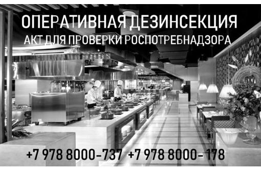 Дезинсекция в Севастополе, уничтожение тараканов и вредителей, фото — «Реклама Севастополя»