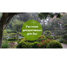 «Изобильный питомник» - отборные деревья и кусты для создания уникального ландшафта - Ландшафтный дизайн в Феодосии