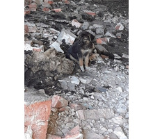 Щенок, девочка в хорошие руки - Собаки в Керчи