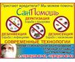 СанПомощь!  Борьба с грызунами , насекомыми , микроорганизмами., фото — «Реклама Севастополя»